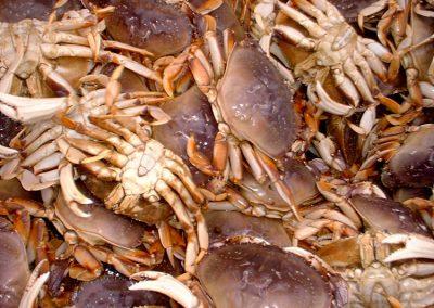Crabbing Instructional Videos
